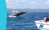 Boat Excursion and Tour in samana